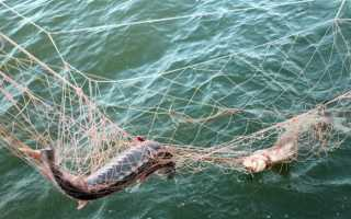 Как наказывают за браконьерство по статье 256 УК РФ