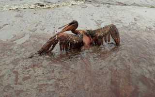 Ст. 252 УК РФ – Загрязнение морской среды: особенности состава преступления